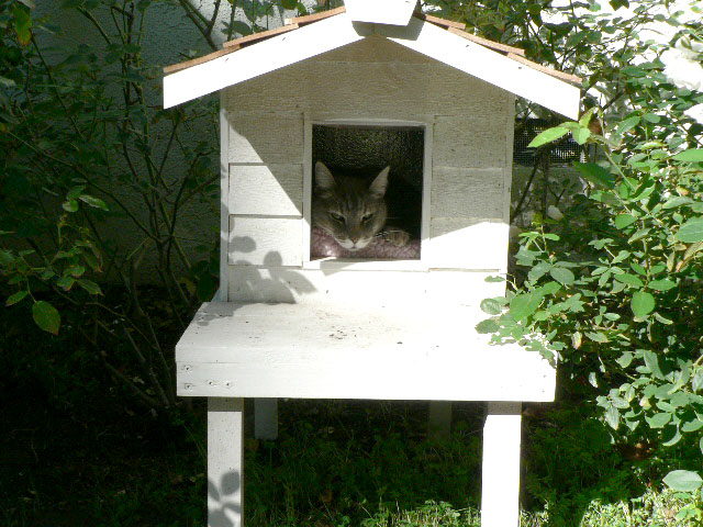 Raised Cat House